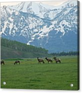 Crossing The Field Acrylic Print