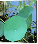Crossing The Lily Pond Outback Nubmer Two Square Acrylic Print