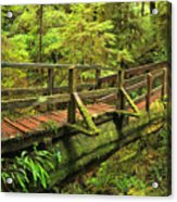 Crossing The Rainforest Ravine Acrylic Print
