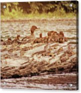 Crossing The River Acrylic Print