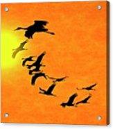 Crossing the Sun, Sandhill Cranes Acrylic Print