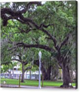Crossing Trees Acrylic Print