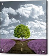 Crossroad In Lavender Meadow Acrylic Print