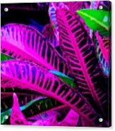 Croton Acrylic Print