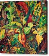 Crotones Acrylic Print