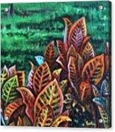 Crotons 4 Acrylic Print