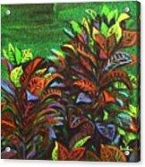 Crotons 6 Acrylic Print