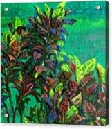 Crotons 7 Acrylic Print