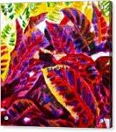 Crotons Sunlit 1 Acrylic Print