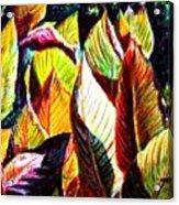 Crotons Sunlit 2 Acrylic Print