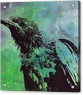 Crow II Acrylic Print
