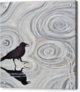 Crow In A Rain Puddle Acrylic Print