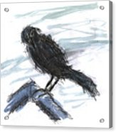 Crow In The Wind Acrylic Print
