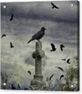Crow Keeps Her Perch Acrylic Print