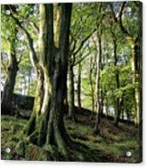 Crow Nest Woods Acrylic Print