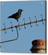 Crow On Aerial Acrylic Print