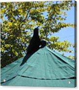 Crow On An Umbrella Acrylic Print