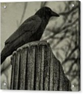 Crow Perched On A Old Column In Rain Acrylic Print
