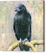 Crow Vigilant Acrylic Print