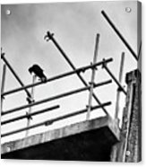 Crow Watches Over Acrylic Print