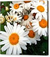 Crowd Of Daisies Acrylic Print
