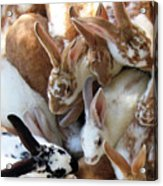Crowd Of Rabbits Acrylic Print