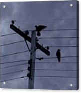 Crows And A Crescent Moon Acrylic Print