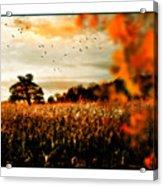 Crows And Corn Acrylic Print
