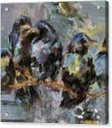 Crows In A Row Acrylic Print