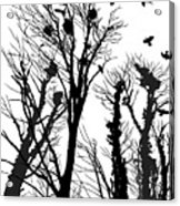 Crows Roost 1 - Black And White Acrylic Print