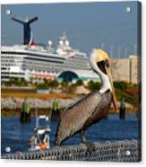 Cruising Pelican Acrylic Print