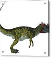 Cryolophosaurus Side Profile Acrylic Print