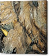 Crystal Cave Wall Formations Acrylic Print