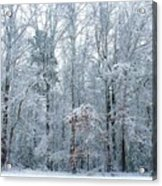 Crystal Forest Acrylic Print by Jeanette Stewart