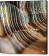 Crystals And Stones Shell 4721 Acrylic Print