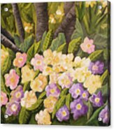 Crystal's Primroses Acrylic Print