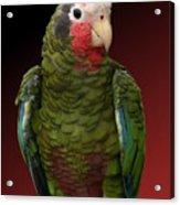 Cuban Amazon Parrot Acrylic Print