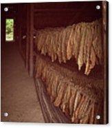 Cuban Tobacco Shed Acrylic Print