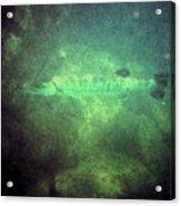Cuda In The Water Acrylic Print