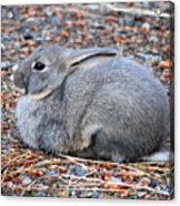 Cuddly Campground Bunny Acrylic Print