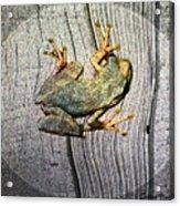 Cudjoe Key Frog Acrylic Print