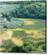 Cultivated Vineyards Tuscany  Italy Acrylic Print