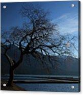 Cultus Tree Acrylic Print
