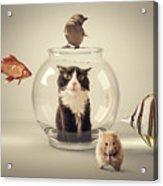 Curiosity Killed The Cat Acrylic Print