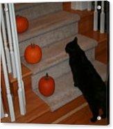 Curious Black Cat Acrylic Print