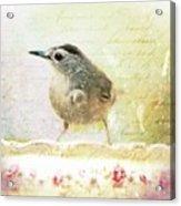Curious Catbird Acrylic Print