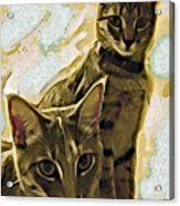Curious Cats Acrylic Print by David G Paul