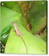 Curious Lizard I Acrylic Print