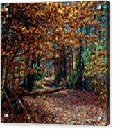 Curious Path In Autumn Acrylic Print
