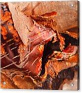 Curled Bark Acrylic Print